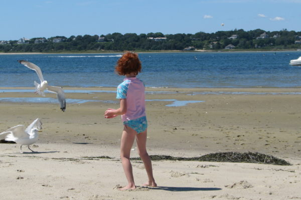 Catching the sea gulls
