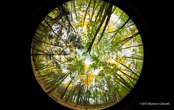 PhotoArtWorks-08-600x380_c