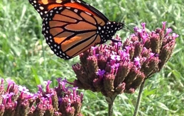butterfly-600x380_c